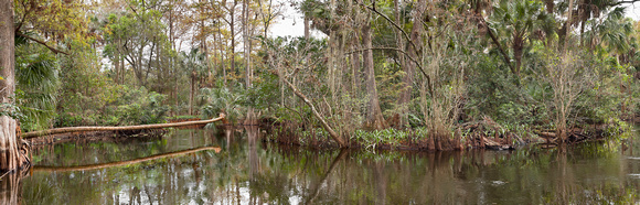 Loxahatchee River II